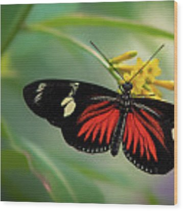 Butterfly, Stop And Smell The Flowers Wood Print by Cindy Lark Hartman
