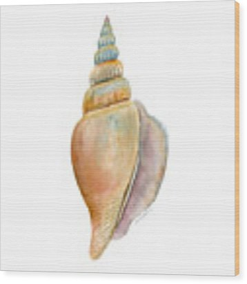 Strombus Vittatus Shell Wood Print by Amy Kirkpatrick