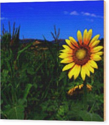 Sunflower Wood Print by Silvia Ganora