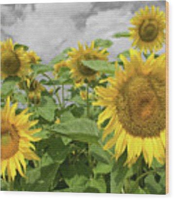Sunflowers I Wood Print by Dylan Punke