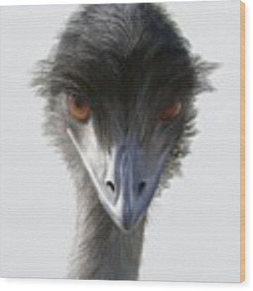 Suspicious Emu Stare Wood Print by Ivana Westin