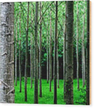 Trees In Rows Wood Print by Julian Perry
