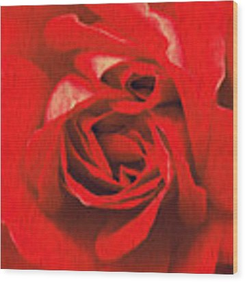 Whats In A Rose? Wood Print by Vix Edwards