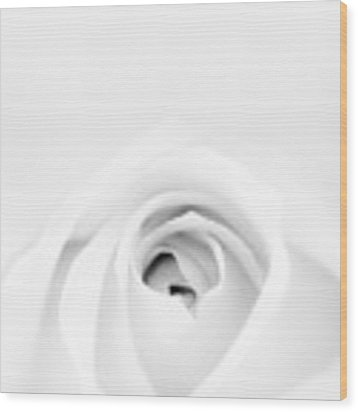 White Rose Wood Print by Scott Norris