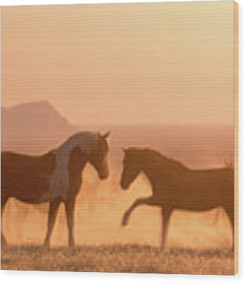 Wild Horse Glow Wood Print by Wesley Aston