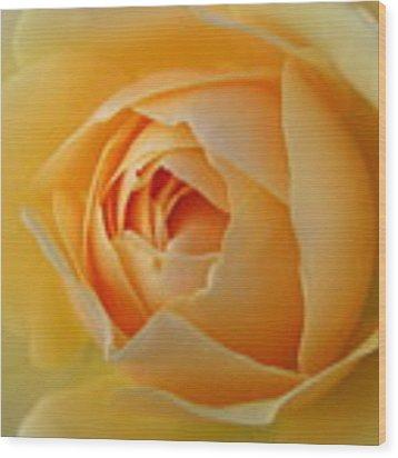 Yellow Graham Thomas Rose Wood Print by Jocelyn Friis