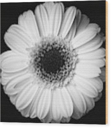 Black And White Flower Wood Print by Mirko Chessari