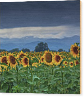 Sunflowers Under A Stormy Sky Wood Print by John De Bord