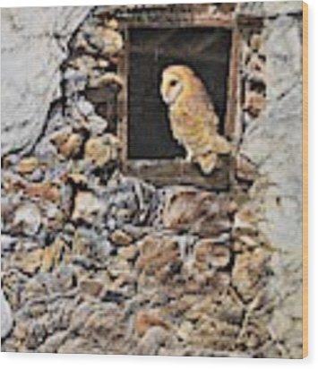 A New Home Barn Owl Wood Print by Alan M Hunt