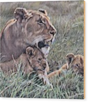 A Quiet Moment Lioness And Lion Cubs Wood Print by Alan M Hunt
