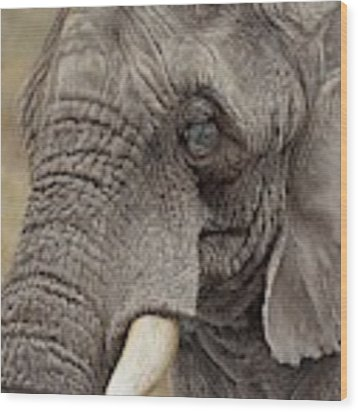 African Elephant Wood Print by Alan M Hunt