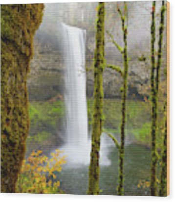 Autumn At Silver Falls State Park Wood Print by Nicole Young