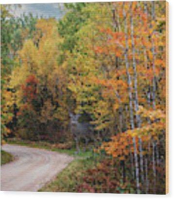 Autumn Buck  Wood Print by Patti Deters