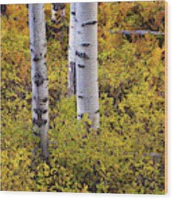 Autumn Contrasts Wood Print by John De Bord