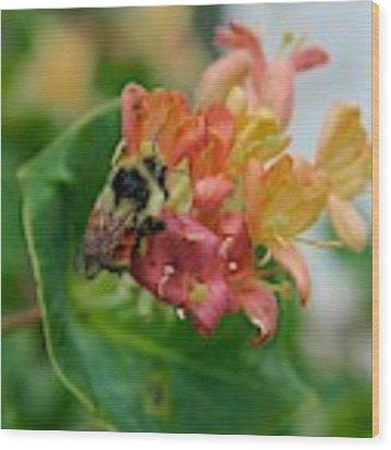 Bee On Wild Honeysuckle Wood Print by Ann E Robson