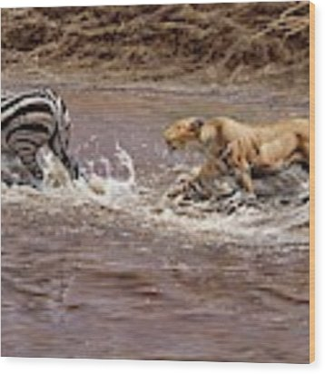 Closing In - Lion Chasing A Zebra Wood Print by Alan M Hunt