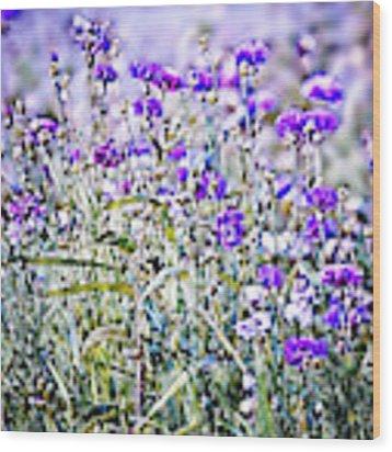 Cornflower Meadow Wood Print by Susan Maxwell Schmidt