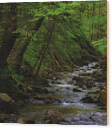 Creek Flowing Through Shady Forest Wood Print by Dee Browning