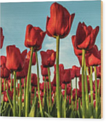 Dutch Red Tulip Field. Wood Print by Anjo Ten Kate