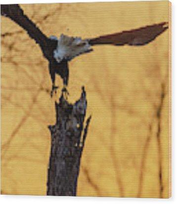Eagle Flying Off Wood Print by Steven Santamour