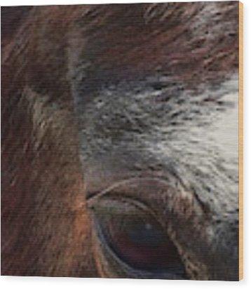Eye Of A Horse  Wood Print by Shelli Fitzpatrick