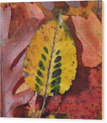 Fallen Leaves Wood Print by Daniel Reed