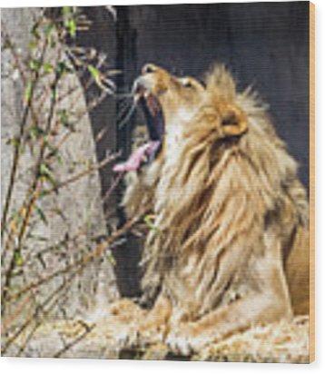 Fierce Yawn Wood Print by Kate Brown