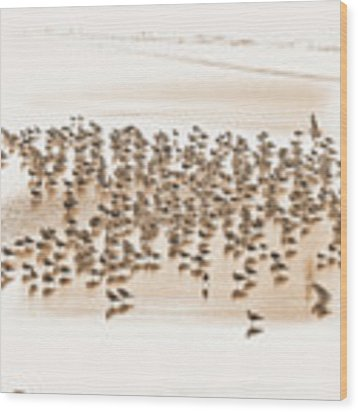 Flock Of Seagulls On Sandy Beach Wood Print by Dee Browning