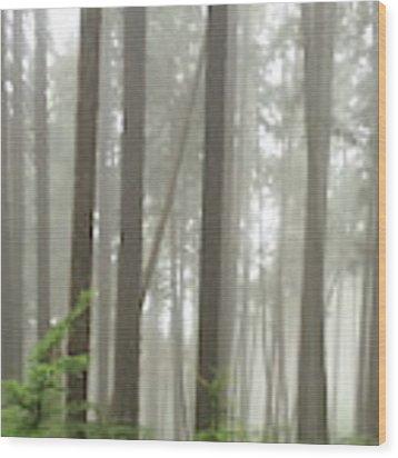 Foggy Forest Wood Print by Karen Zuk Rosenblatt