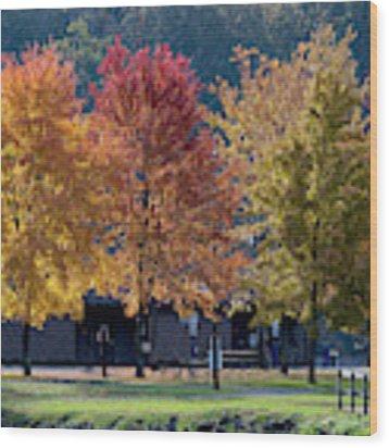 Four Tree Lineup Wood Print by Dan Friend