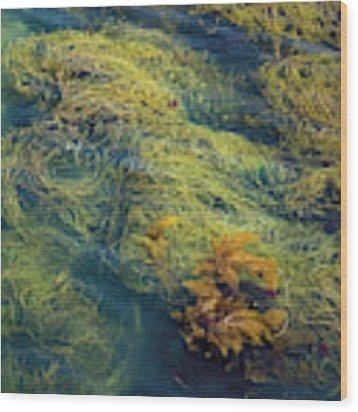 Golden Seaweed Wood Print by Susan Wiedmann