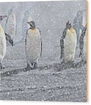 Group Of King Penguins In The Snow Wood Print by Alan M Hunt