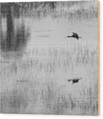 Ibsis Flying In At Evening To Roosting Ground Wood Print by Dan Friend