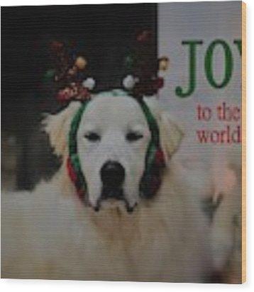 Joy To The World Pyrenees Wood Print by Patti Whitten