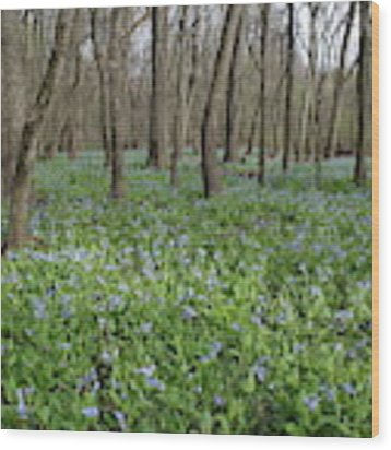 Merwin Lowland Bluebells II Wood Print by Dylan Punke