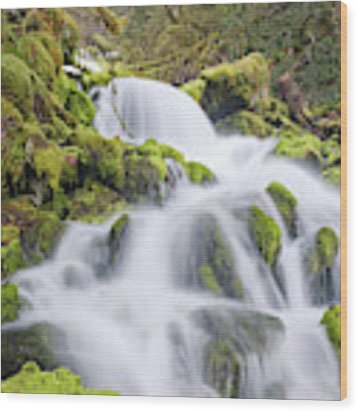 Mossy Falls Wood Print by Nicole Young