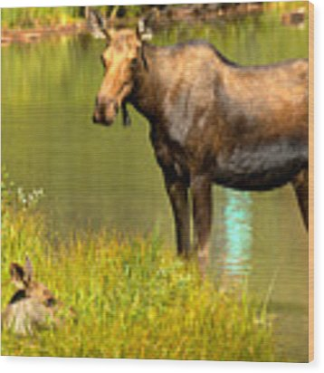 Mother Moose And Junior Wood Print by Adam Jewell