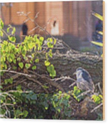 Night Heron At The Palace Wood Print by Kate Brown