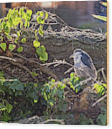 Night Heron At The Palace Revisited Wood Print by Kate Brown