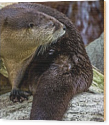Otter Interrupted Wood Print by Kate Brown
