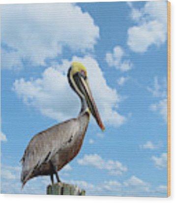 Pelican At The Beach Wood Print by Kim Hojnacki