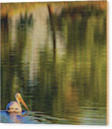 Pelican In Sunlight Wood Print by John De Bord