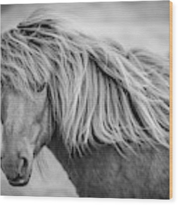 Portrait Of Icelandic Horse In Black And White Wood Print by Gigi Ebert