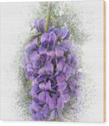 Purple Texas Mountain Laurel Flower Cluster Wood Print by Patti Deters
