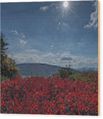 Red Leaves In The Sun Wood Print by Dan Friend