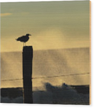 Seagull Silhouette On A Piling Wood Print by William Dickman
