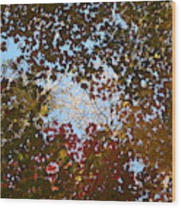 Shadow Canopy Wood Print by Dylan Punke
