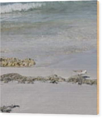 Shorebird Wood Print by Ruth Kamenev