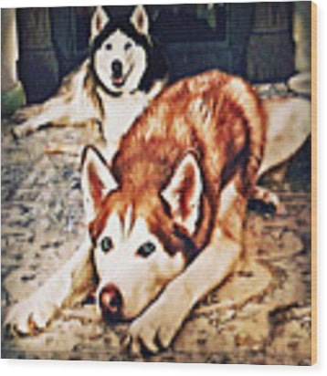 Siberian Huskies At Rest A22119 Wood Print by Mas Art Studio