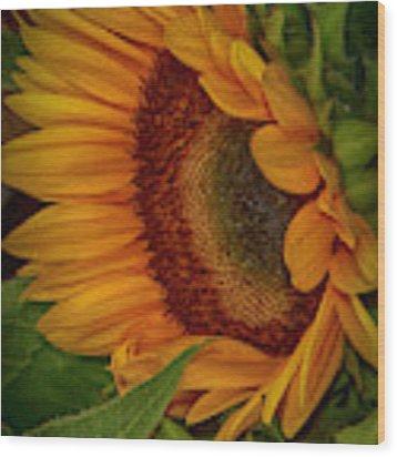Sunflower Beauty Wood Print by Judy Hall-Folde